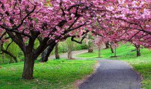 Perjalanan Liburan Terbaik Musim Semi di bulan April